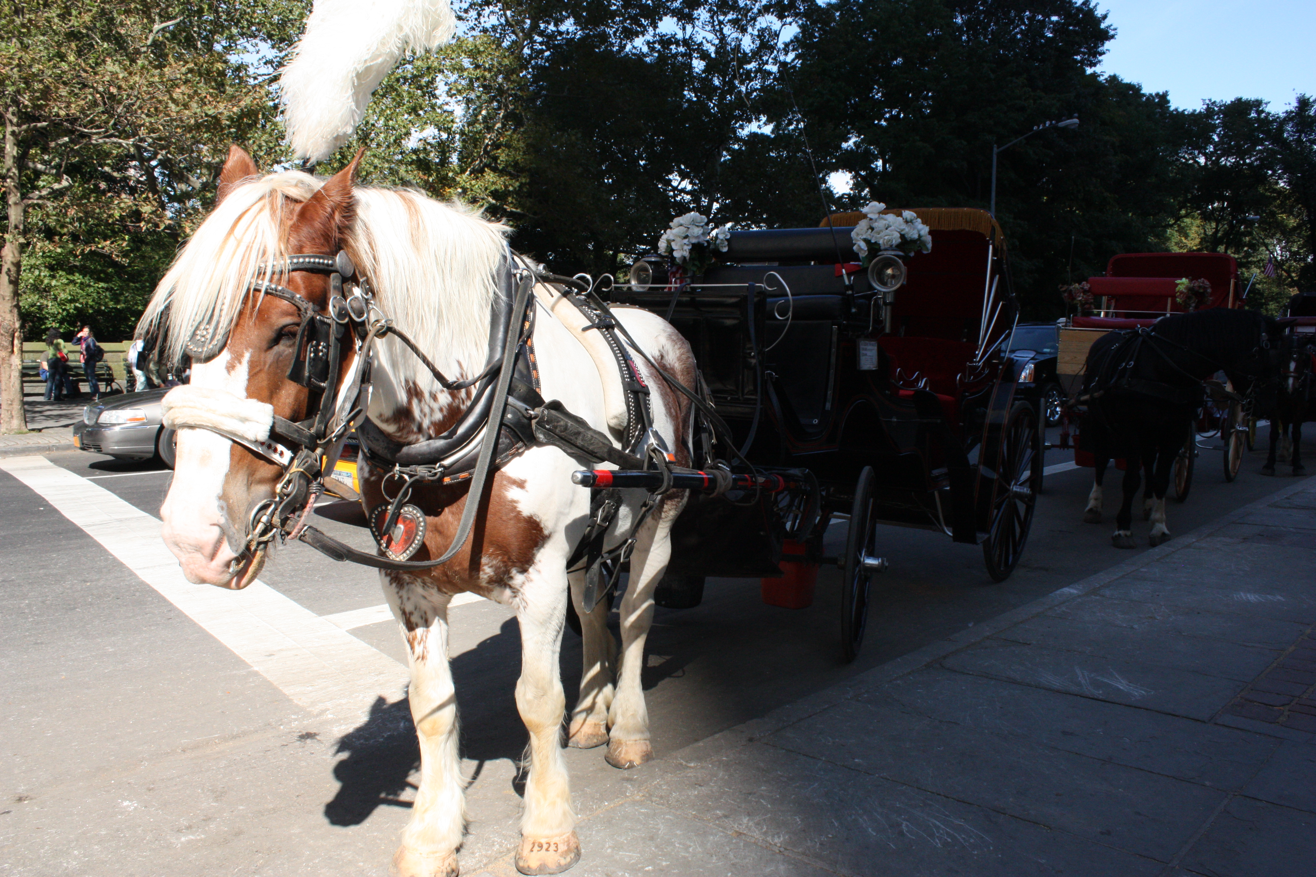 Carriage horse in the sun