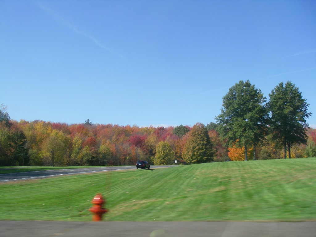 Fall Foliage along Route 116