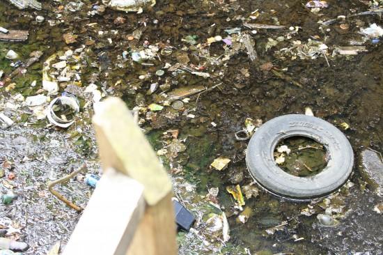 'Bronx Swamp' endangers health