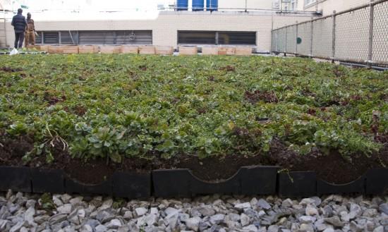 Living roof installed on Mott Haven high school